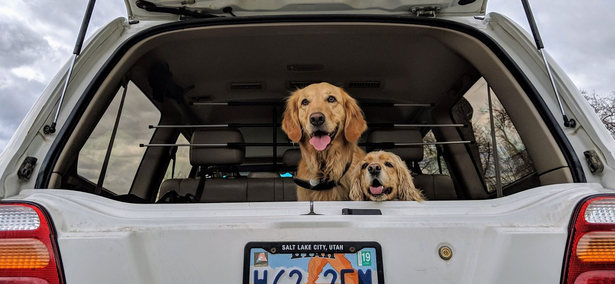 How To Get Dog Hair Out Of The Car Carcarehunt